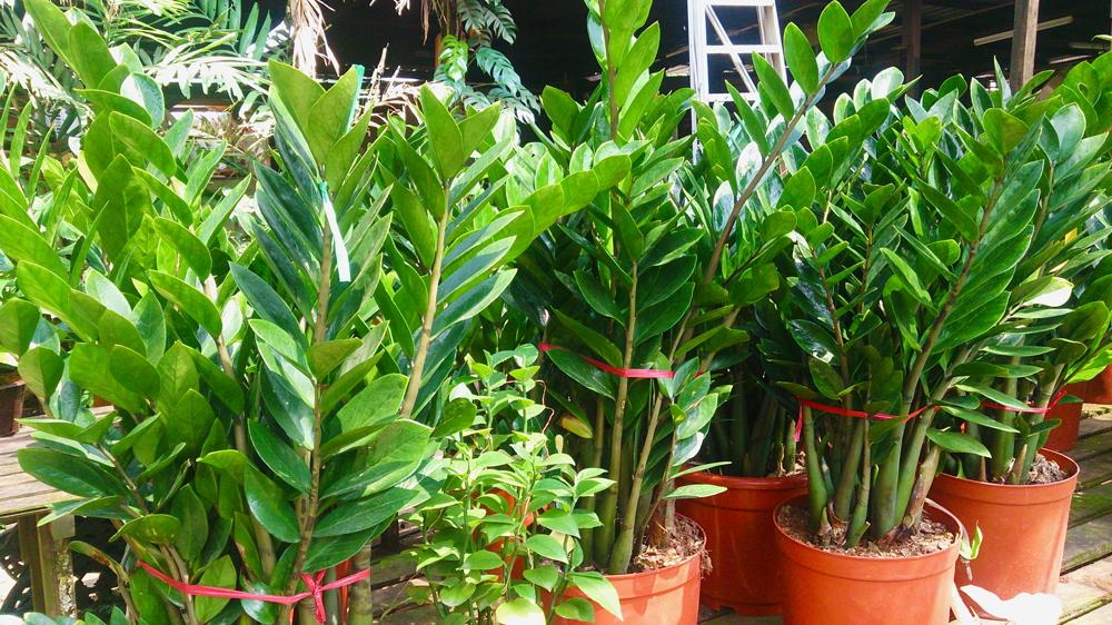 Cele mai potrivite plante pentru apartament